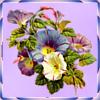 Kleiderkammer von Andrea-1- Blumenava1ofstkzn