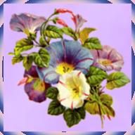 Kleiderkammer von Andrea-1- Blumenava1ufvtkoh