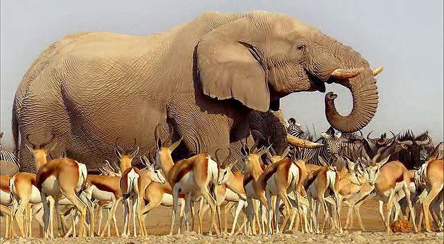 BBC Africa 1.Bölüm Kalahari Ekran Görüntüsü 2