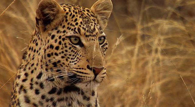 BBC Africa 1.Bölüm Kalahari Ekran Görüntüsü 1