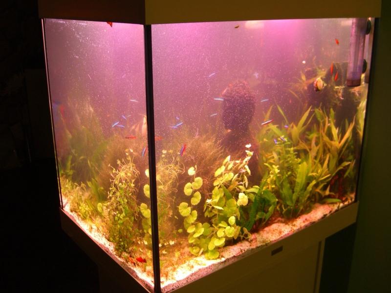 bis 200l juwel lido 200 umbau aquarium forum. Black Bedroom Furniture Sets. Home Design Ideas