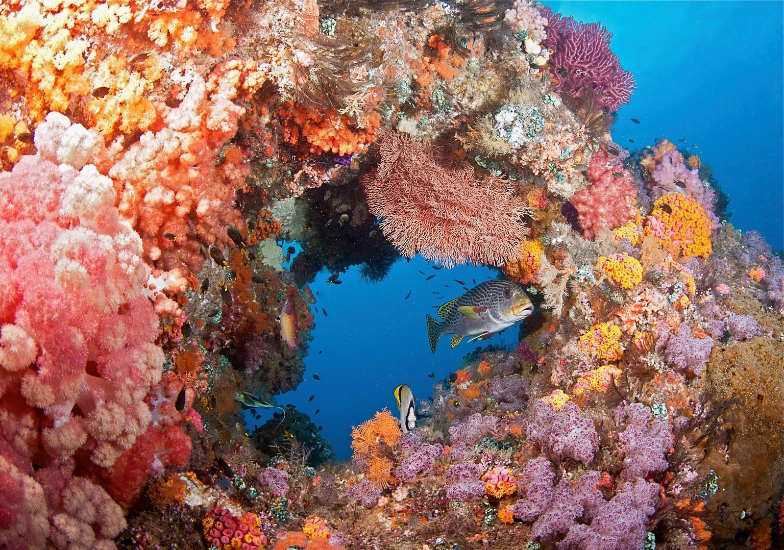 coral_reef2