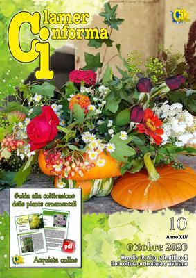 Clamer Informa - Ottobre 2020