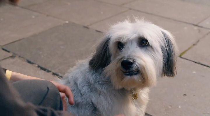 Kahraman Köpek Pudsey Ekran Görüntüsü 2