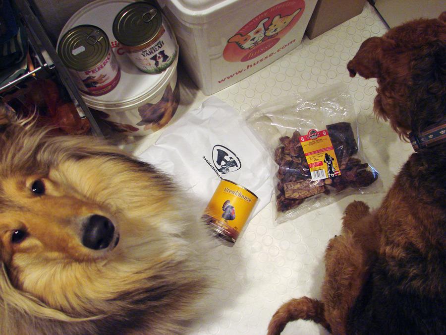 Schwere Entscheidung, Airedale Terrier