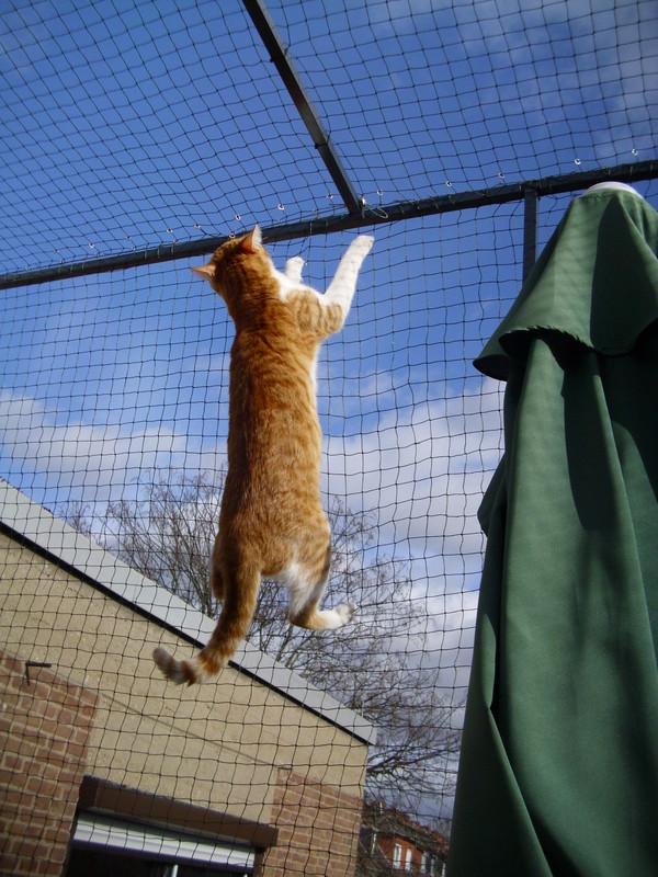 Freistehender Balkon Katzen Forum