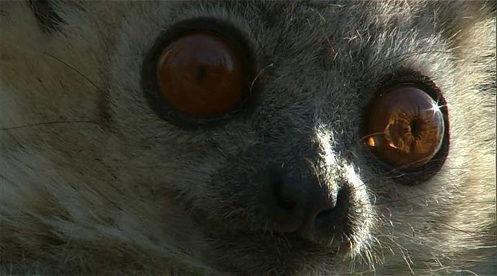 BBC Madagascar: Sıcağın ve Tozun Torakları Ekran Görüntüsü 2
