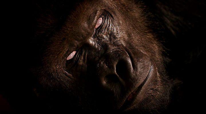 Zombi Hayvanlar Ekran Görüntüsü 2