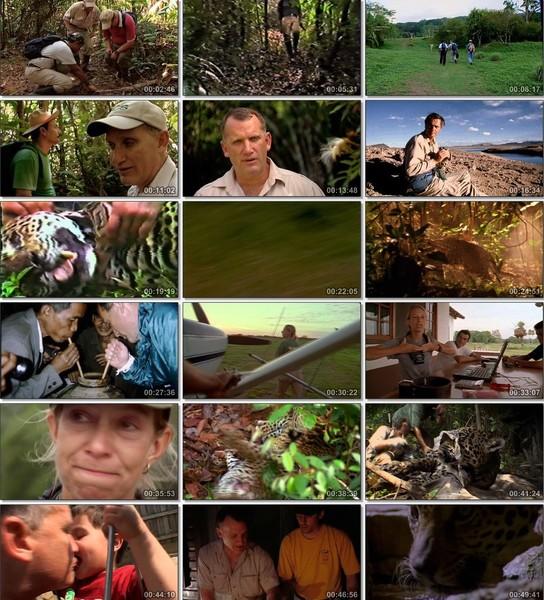 En Vahşi Avcılar: Jaguarın İzinde Ekran Görüntüsü 1