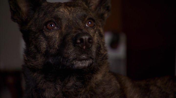 Başkanın Köpeği Ekran Görüntüsü 2