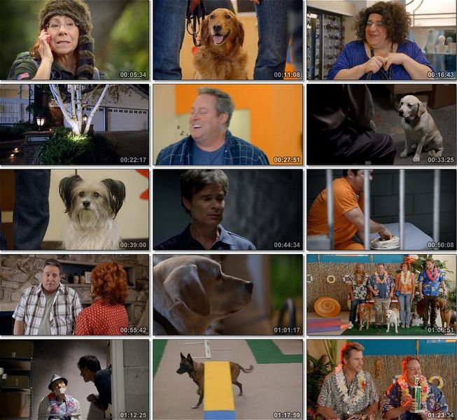 Yaz Köpeği Ekran Görüntüsü 1