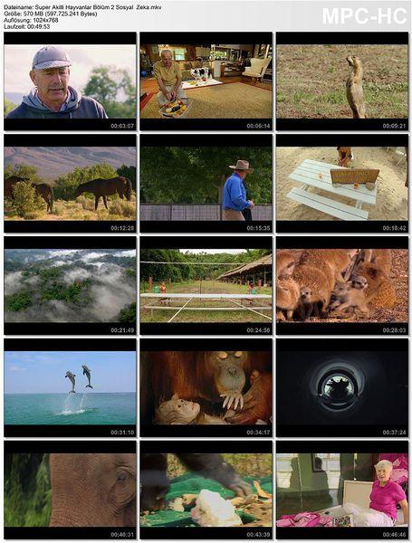 Süper Akıllı Hayvanlar: Bölüm 2 Sosyal  Zeka Ekran Görüntüsü 1