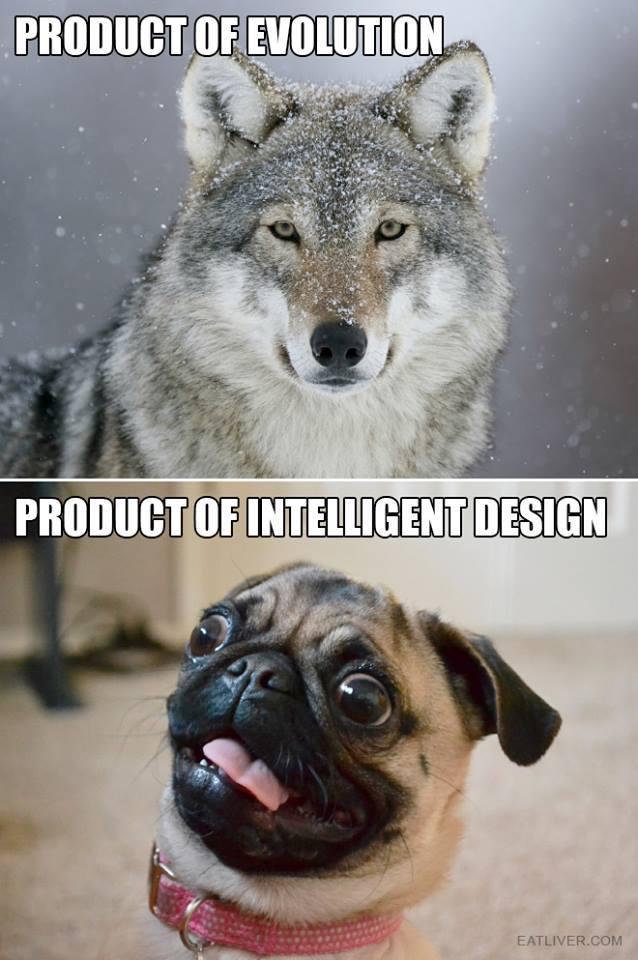 FAKE NEWS Evolution_vs_intelligujp31