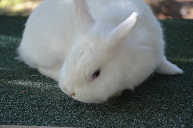kaninchenforum das kaninchen forum online das ist gregor. Black Bedroom Furniture Sets. Home Design Ideas