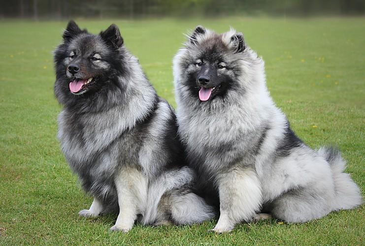 Haylee & Indra