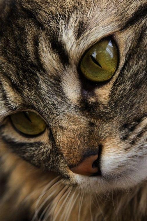 [Resim: hayvan-resimleri_v130iuidp.jpg]