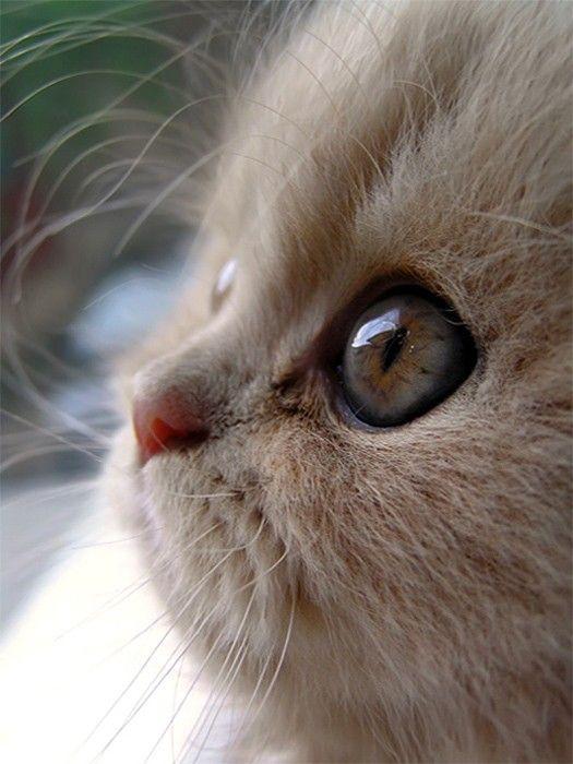[Resim: hayvan-resimleri_v130mkcor.jpg]