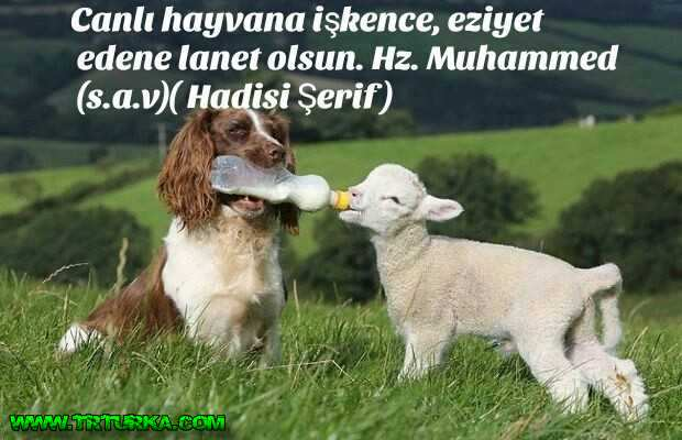 [Resim: hayvanla-ilgili-mesajyxpos.jpg]
