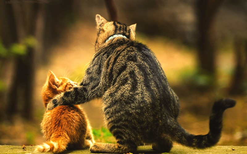 Cat advice animal