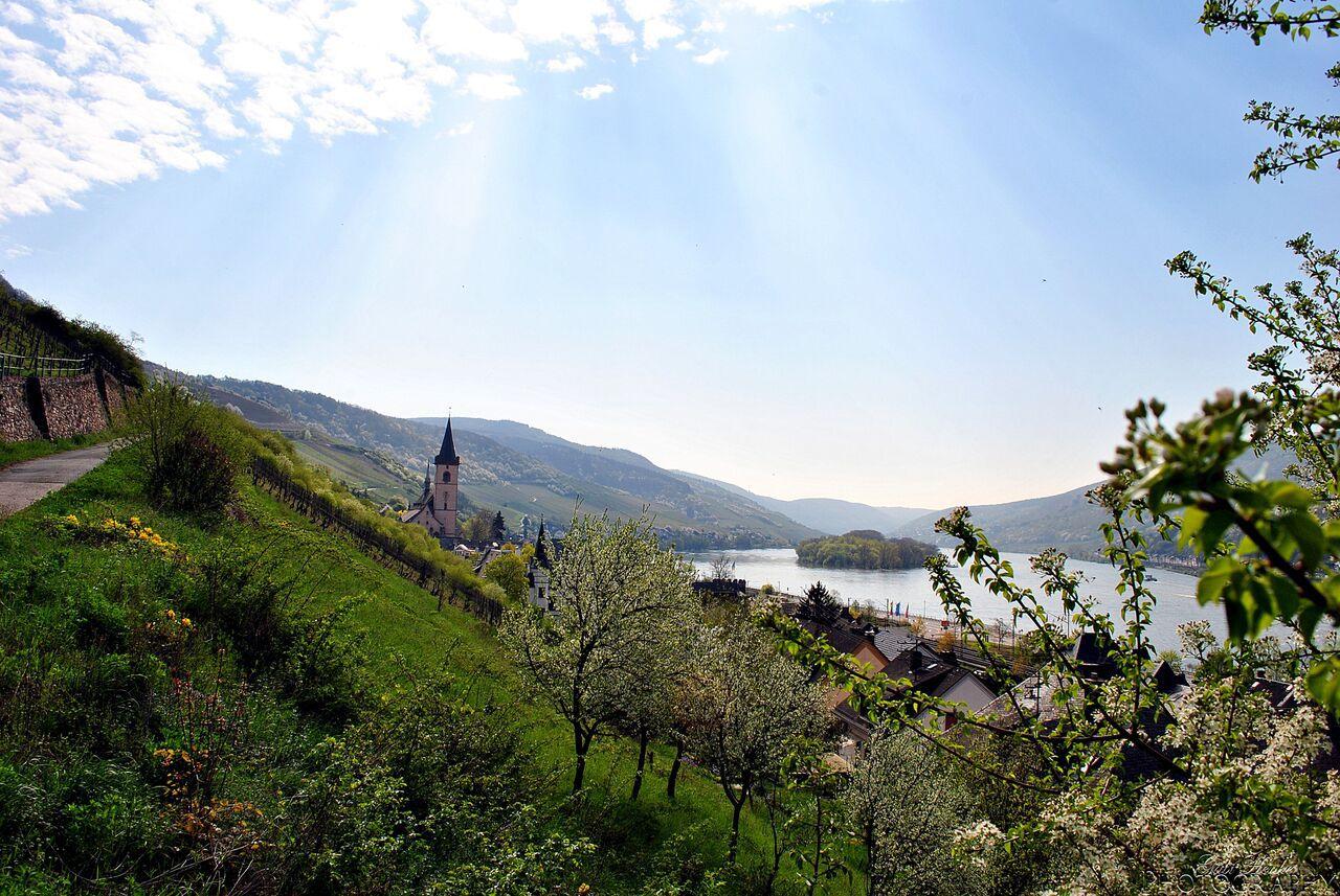 Blick auf die Kirche in Lorch am Rhein (Bild: Gabi Henke Photography)