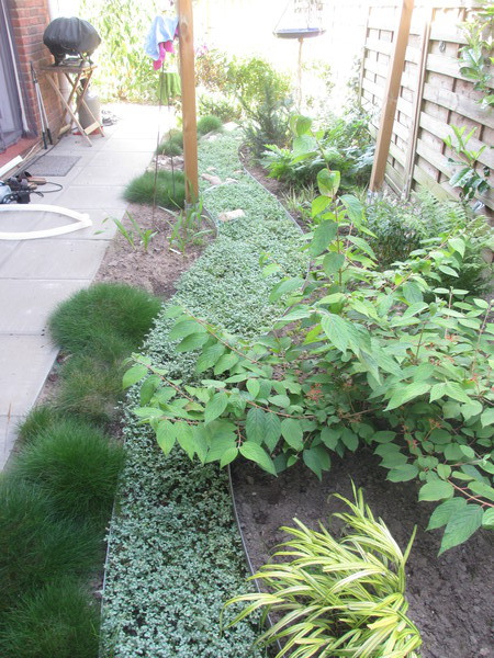 Vorgarten neu bepflanzen seite 1 gartengestaltung mein sch ner garten online - Garten neu bepflanzen ...