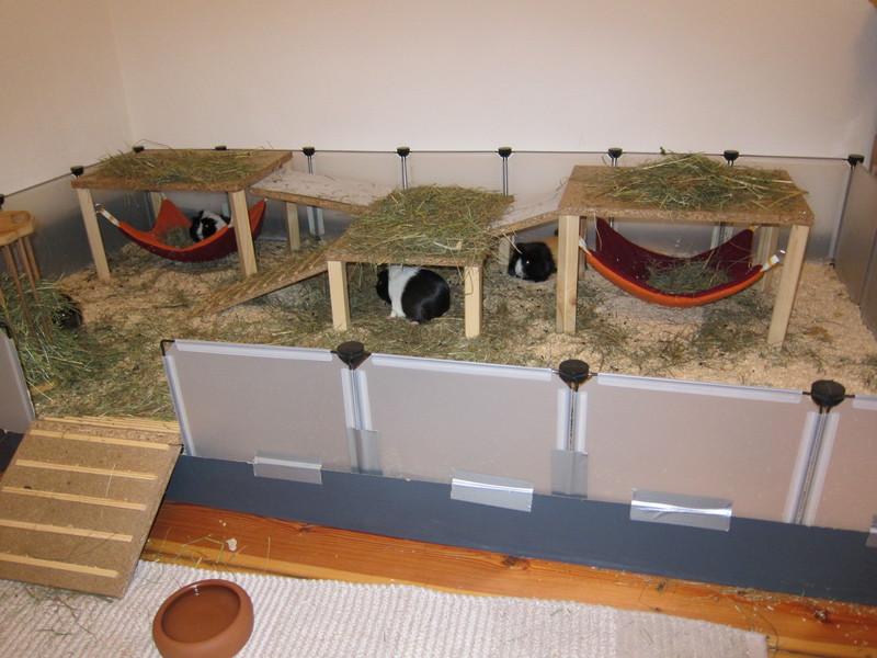 anschaffung meerschweinchen haltung. Black Bedroom Furniture Sets. Home Design Ideas