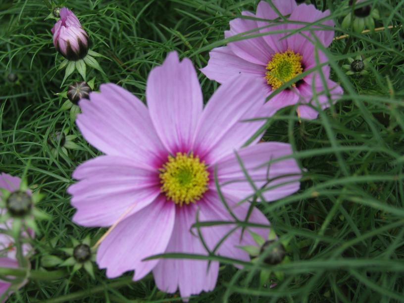 img_1369_gardenflowerstksr.jpg