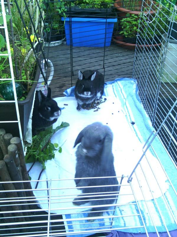 Das Kaninchenchaos.... [Archiv] - Seite 2 - Kaninchenschutz e.V. - Forum