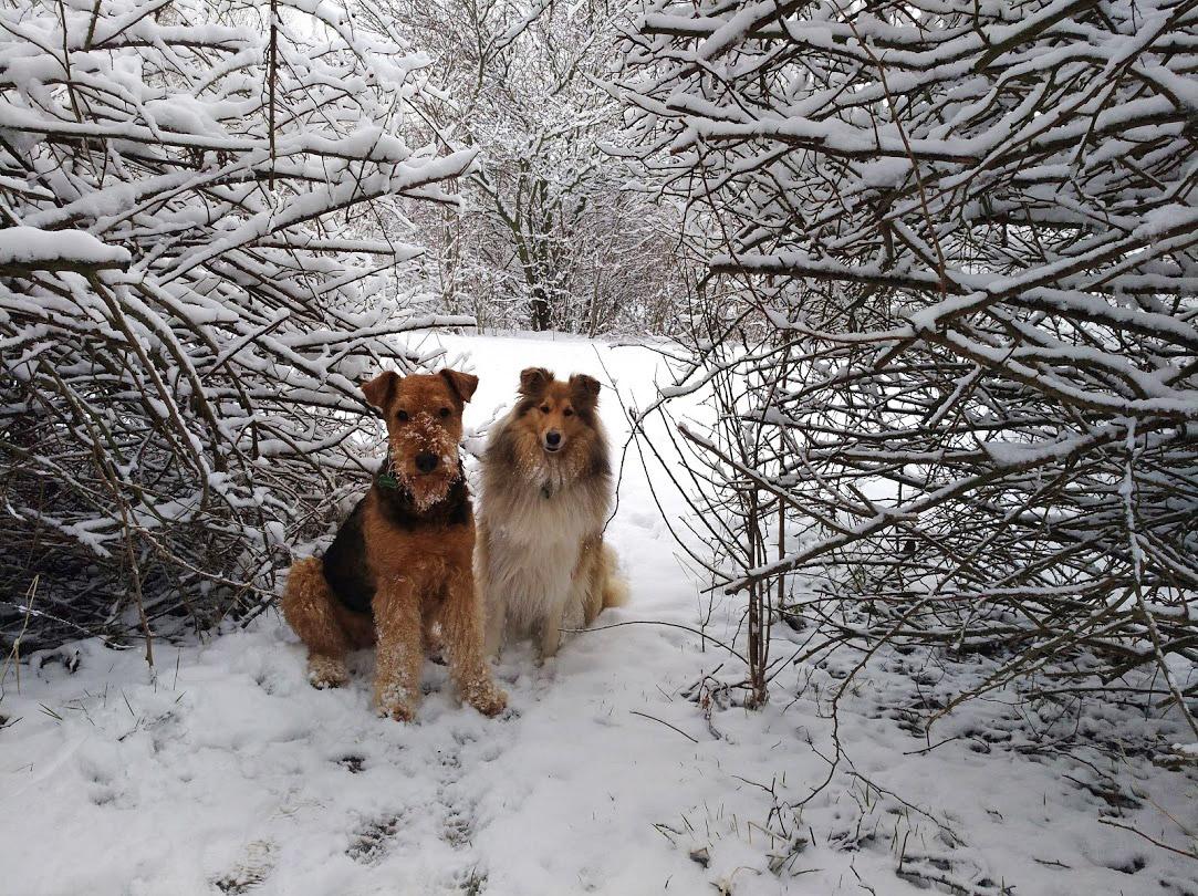 Hunde in Wien