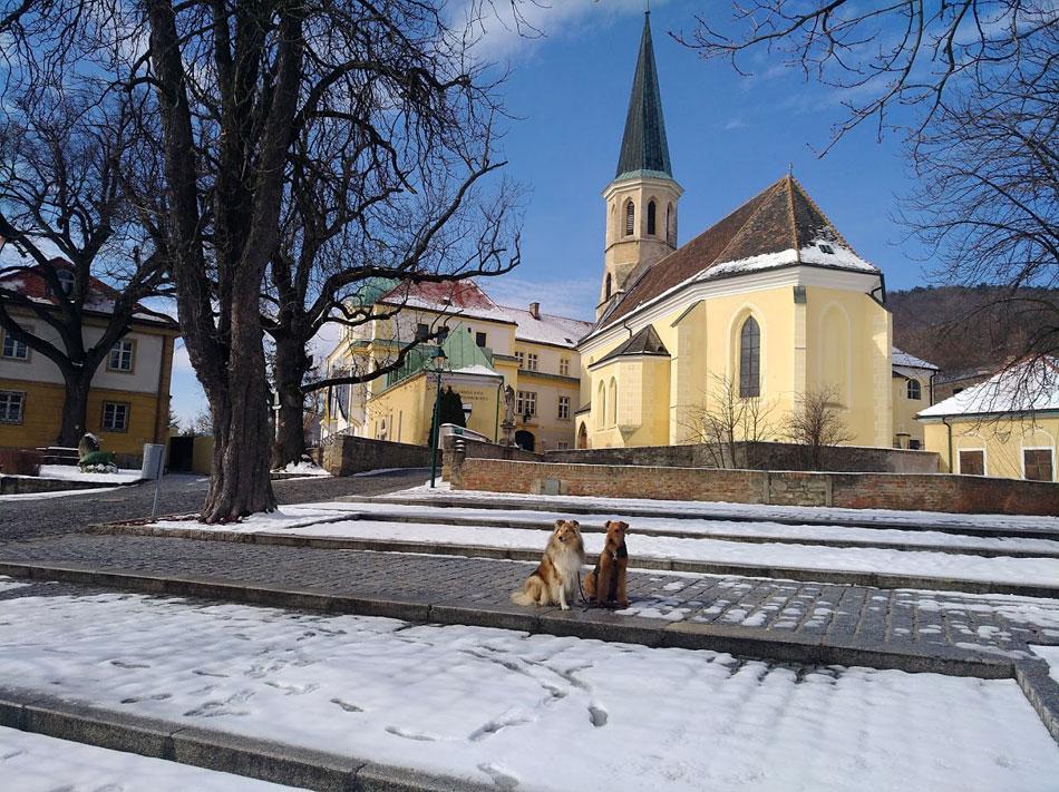 Airedale Terrier Und Collie Zucht Wien