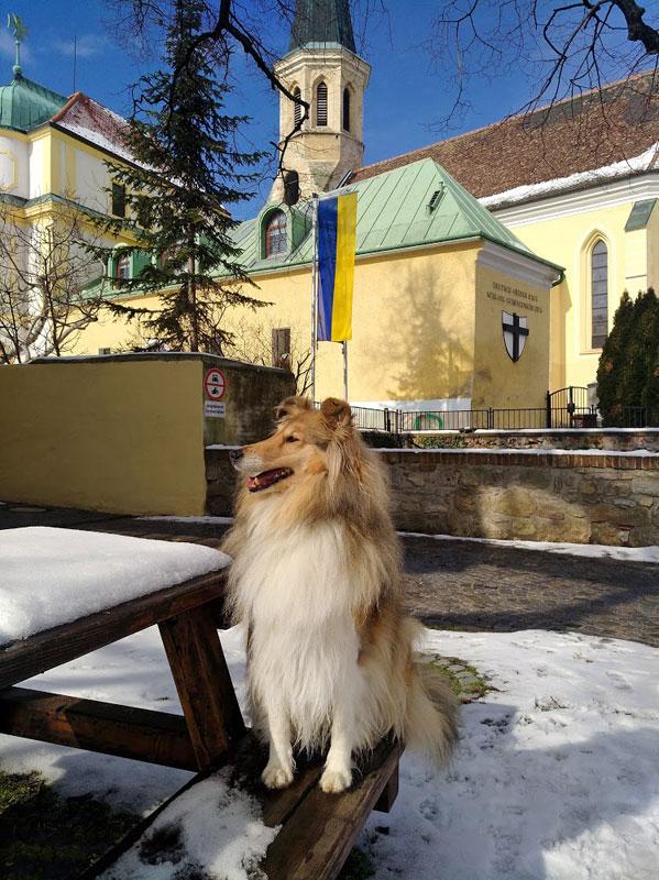 Airedale Terrier Wien Collie Wien