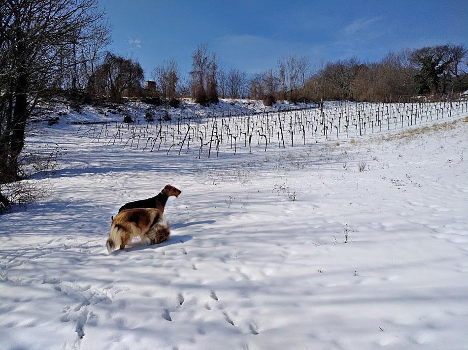 Schnee in Wien, meine Hunde