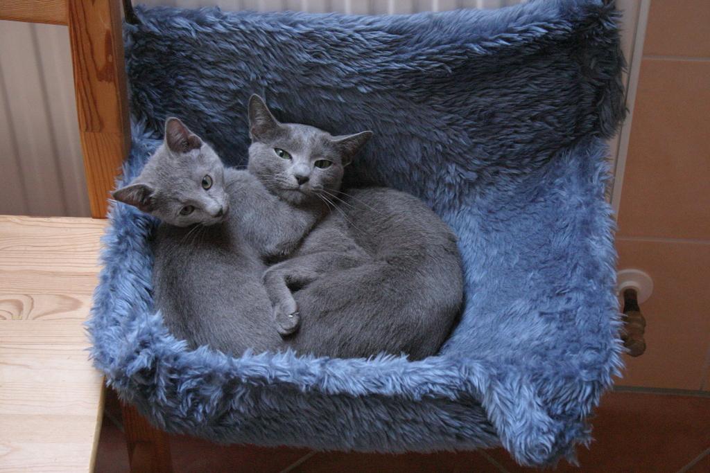 img 20221toqi - Was für ein Haustier habt Ihr? und zeigt viele Bilder davon :-)
