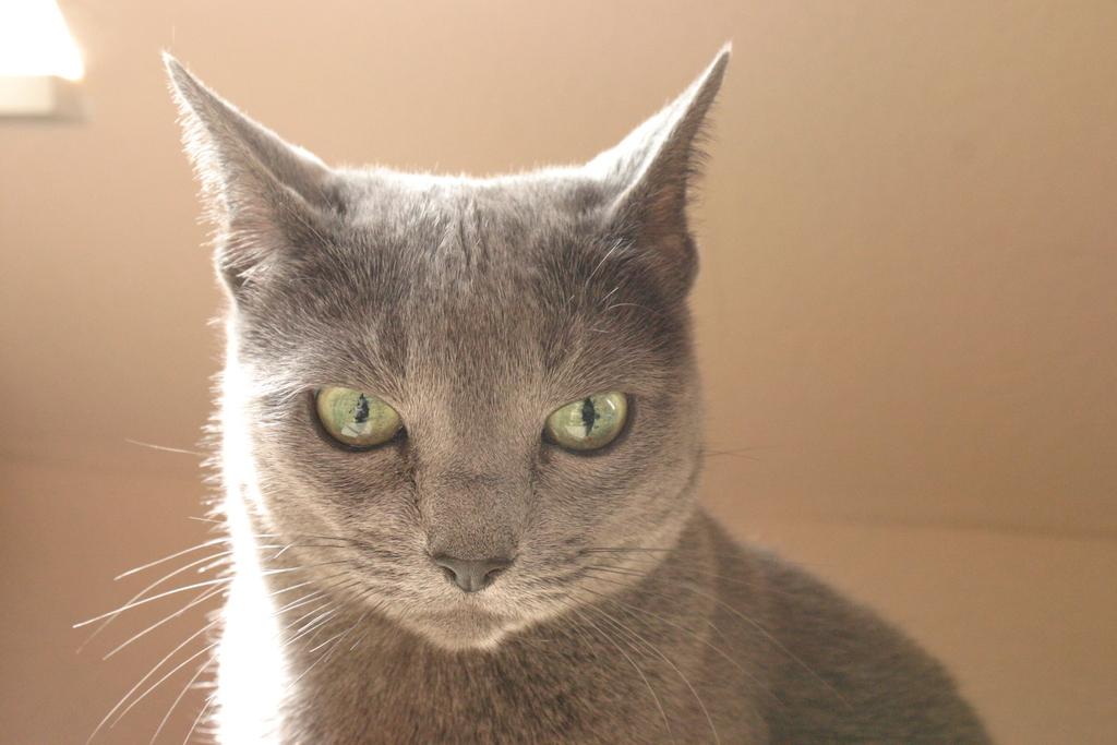 img 23612os15 - Was für ein Haustier habt Ihr? und zeigt viele Bilder davon :-)