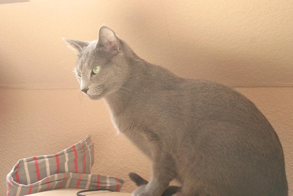 img 2384gusab - Was für ein Haustier habt Ihr? und zeigt viele Bilder davon :-)