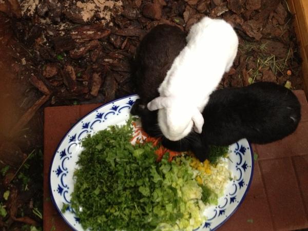 dürfen zwergkaninchen brokkoli essen