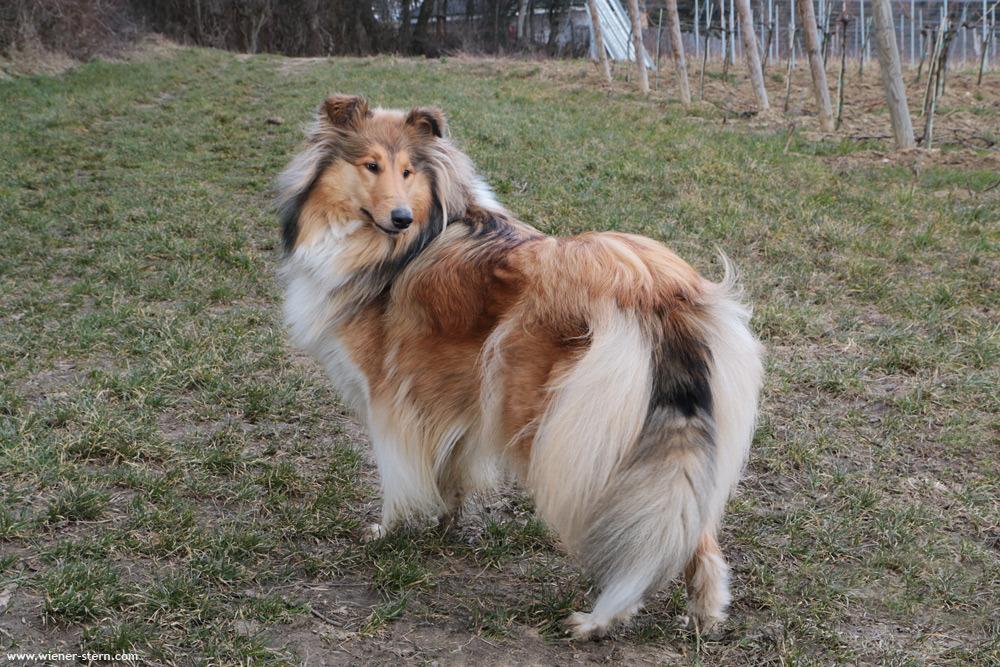 Airedale Terrier Welpen, Mutter