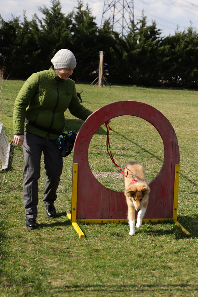 Collie, Airedale Terrier Zucht