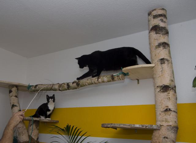 Los Gehts Wir Bauen Uns Einen Kratzbaum Seite 6 Katzen Forum