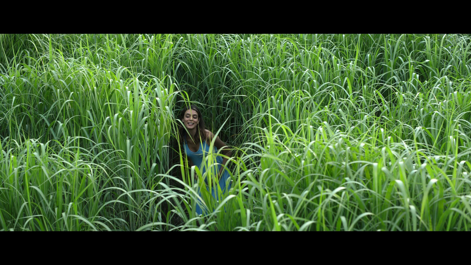 [Resim: in.the.tall.grass.201uhk28.jpg]