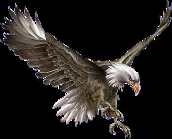 kartal png resimleri png clipart eagle seri5