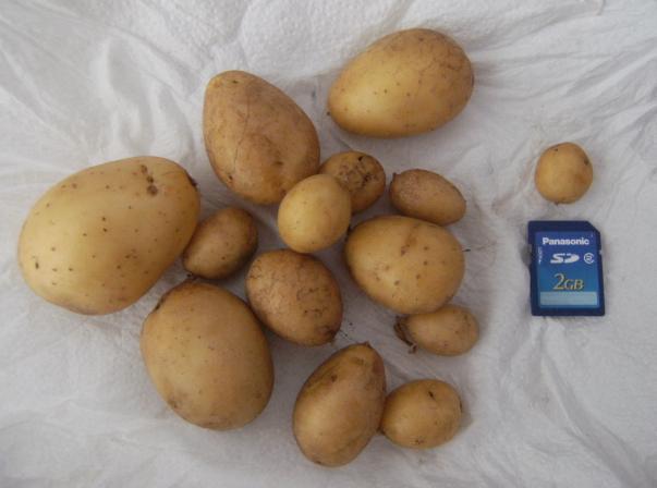 kartoffel2020