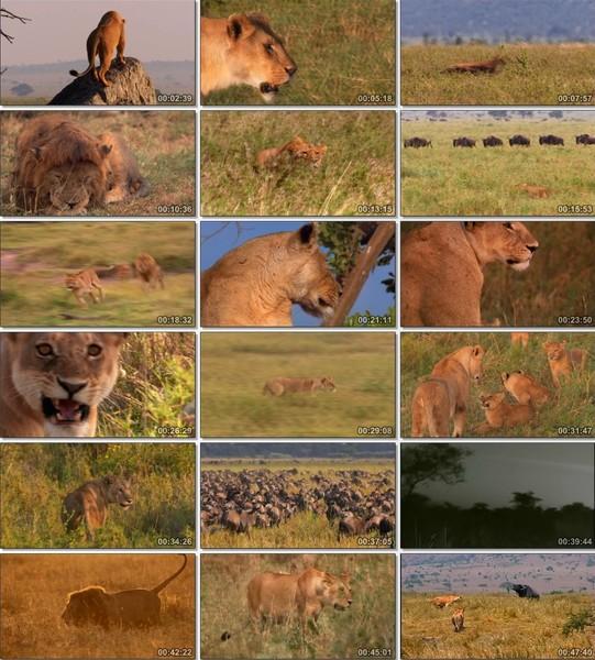 En Vahşi Avcılar: Muhteşem Sürü Ekran Görüntüsü 1