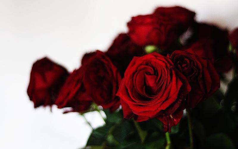 [Resim: kirmizi-gl-red-rose-f91sp6.png]
