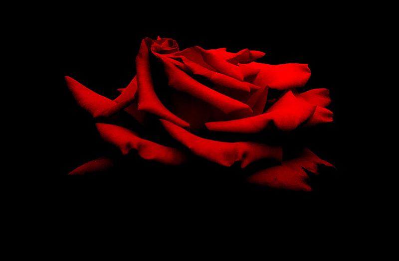 [Resim: kirmizi-gl-red-rose-fflpw0.png]