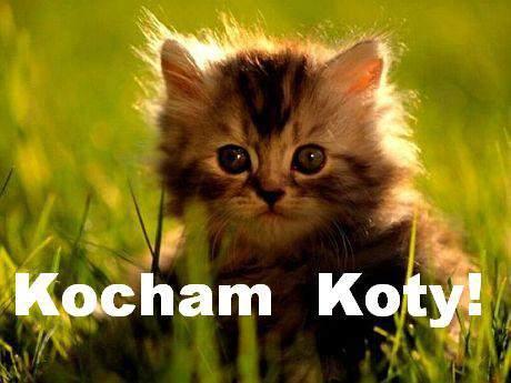 [Obrazek: kocham-koty--a-wybwuqz.jpg]