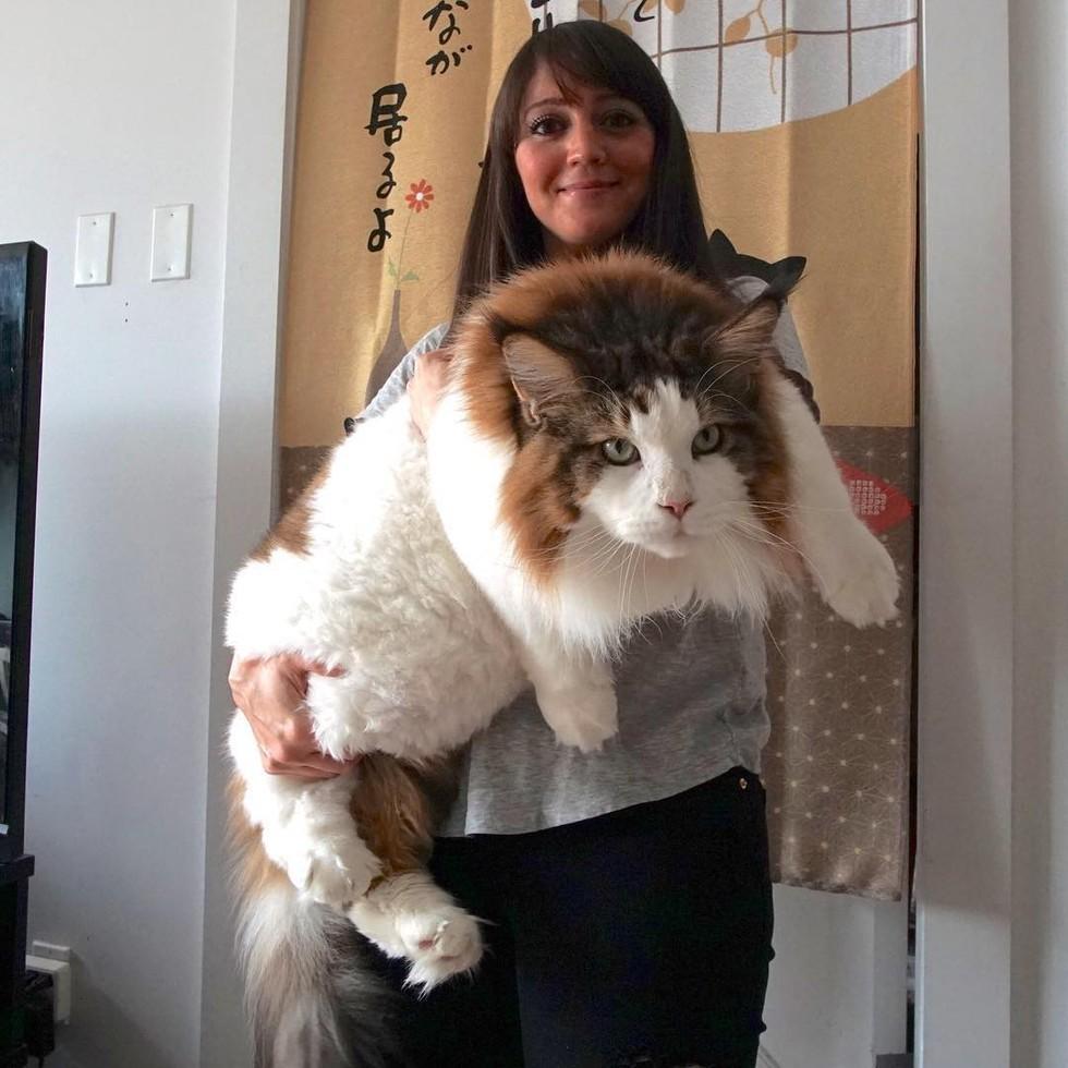 large_cat1