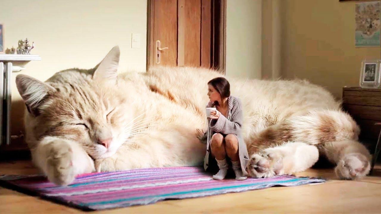 large_cat2