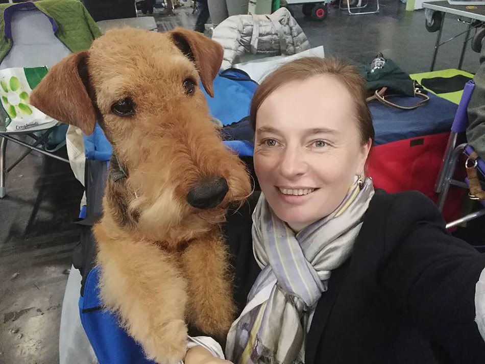 Airedale Terrier und Collie in  Wien
