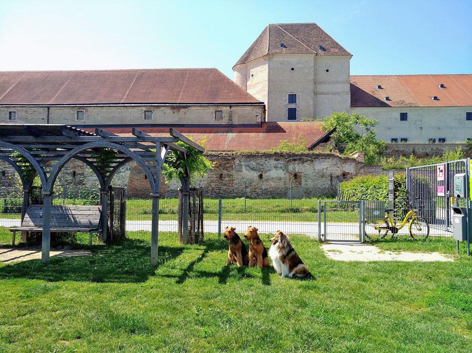 Airedale Terrier und Collie Wien, Osterreich